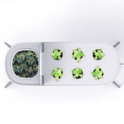 a white container with compostable holder and holes for kitchen herbs